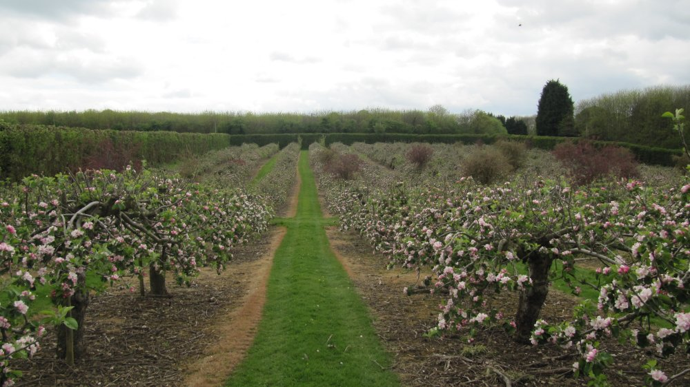 Castle Farm Bramley in bloom