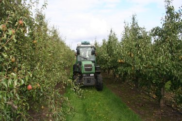 Tractor bringing bins out of the orchard at Adrian Scripps Ltd