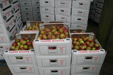 Apples ready for despatch from the farm at Mount Ephraim.