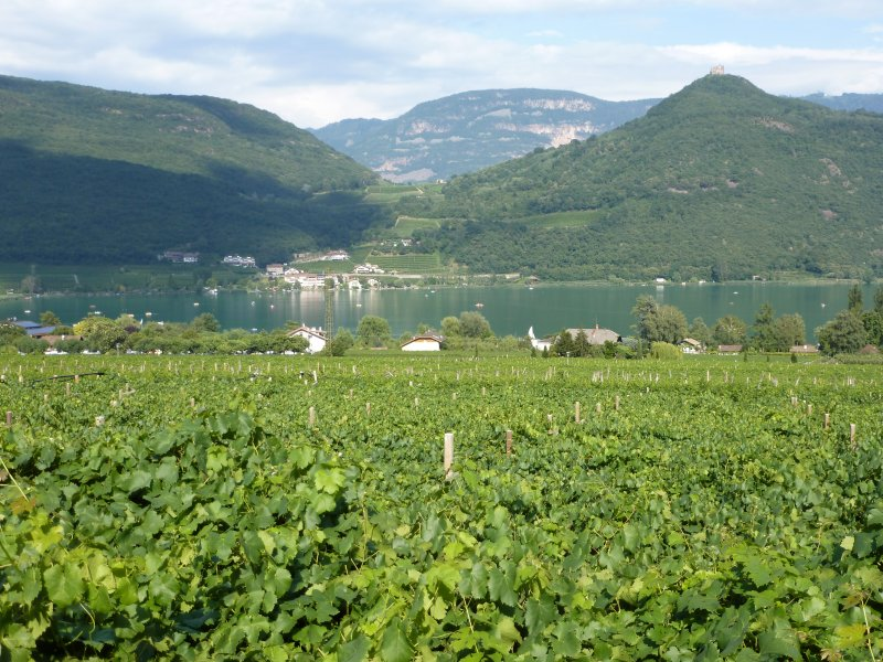 Stunning views down across the vines to Lake Caldaro