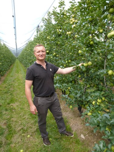 Manfred Varesco in his Pink Lady Orchard