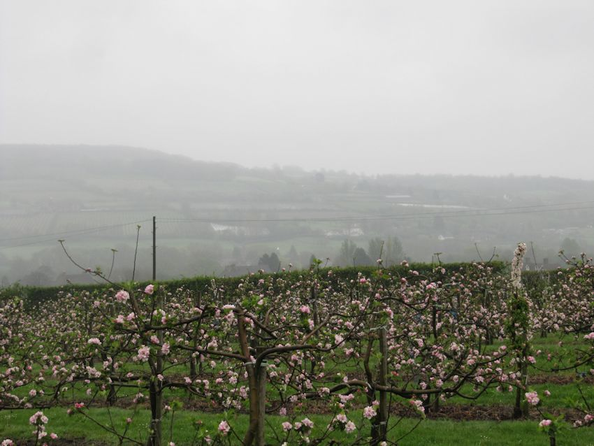 In spite of the misty weather, the views across the farm are stunning!