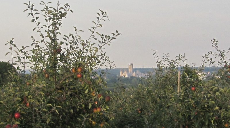 Views of Canterbury Cathedral from the highest point at Howfield Farm