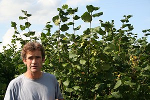 Grower Giles Cannon in his Kent Cob Nut Plantation