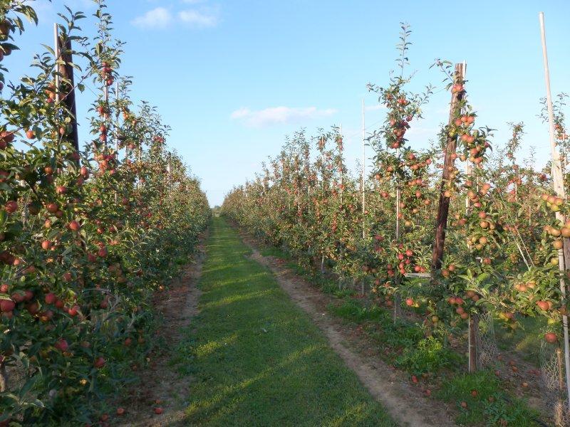 Gala at Gore Farm - Barnyard Orchard