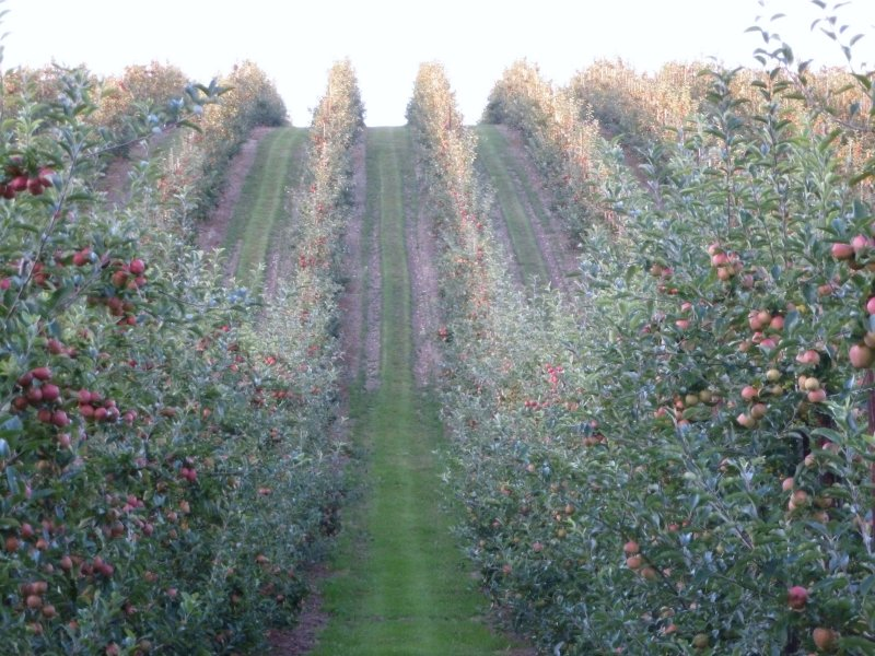This Gala orchard is very 'scenic' and 'productive!