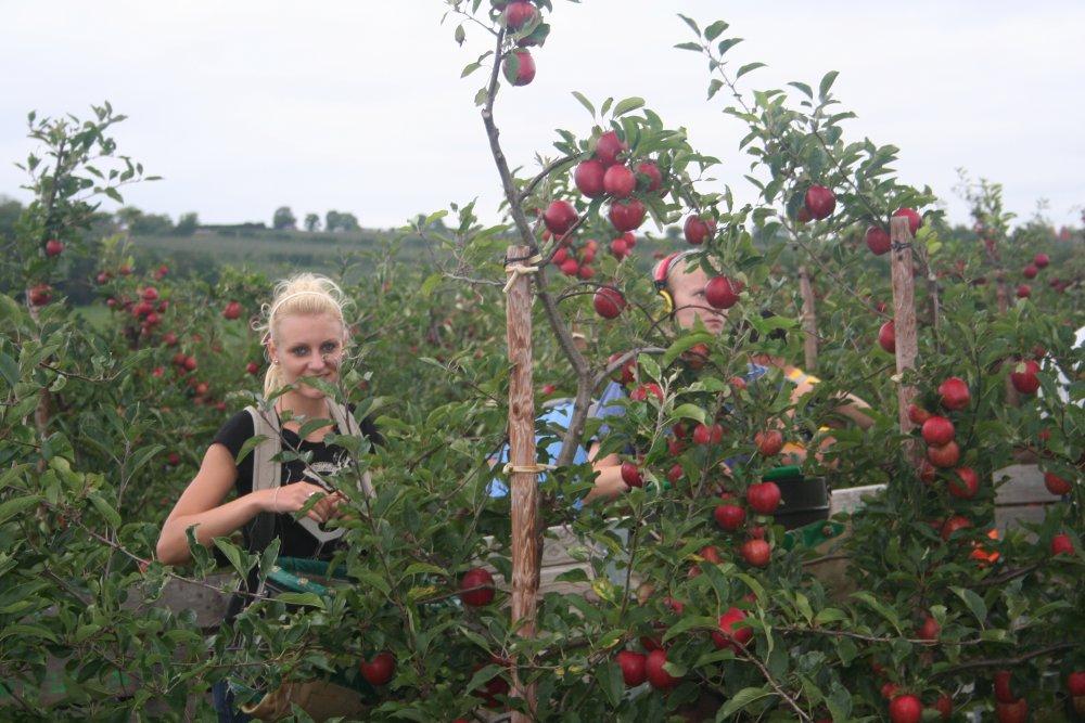 Picking Gala at Combourne Farm