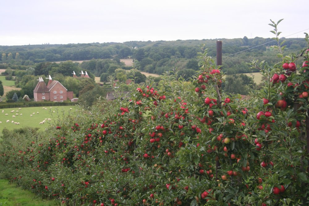 Stunning views from the upper slopes at Combourne Farm