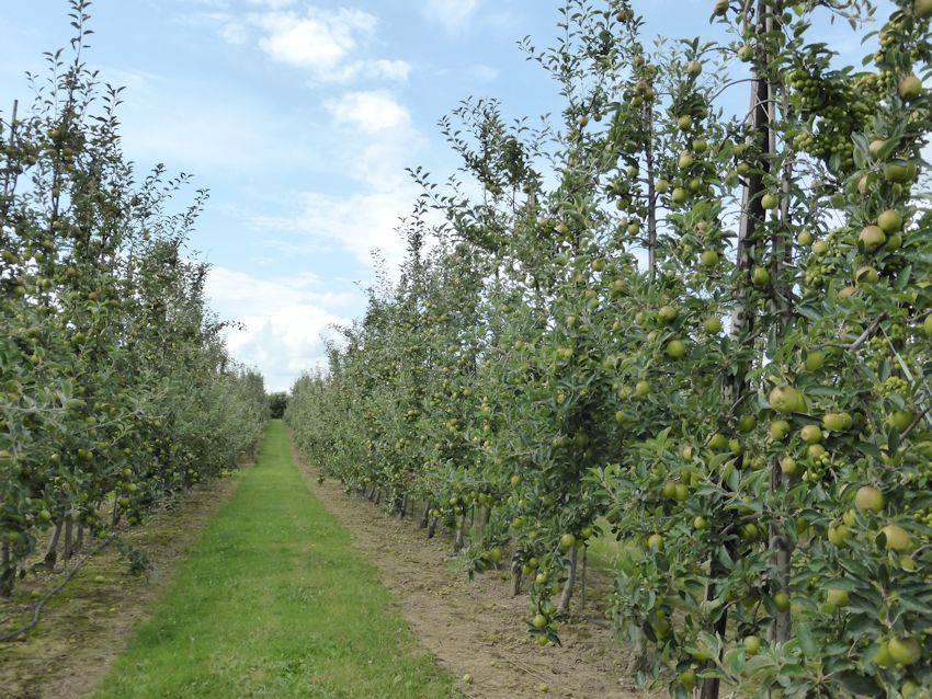 The winning dessert orchard was a Rubens at Gore Farm Upchurch