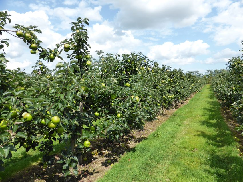 The winning Culinary orchard at Monks Farm Norton