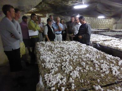 aug.23.2013.Mushrooms.jpg
