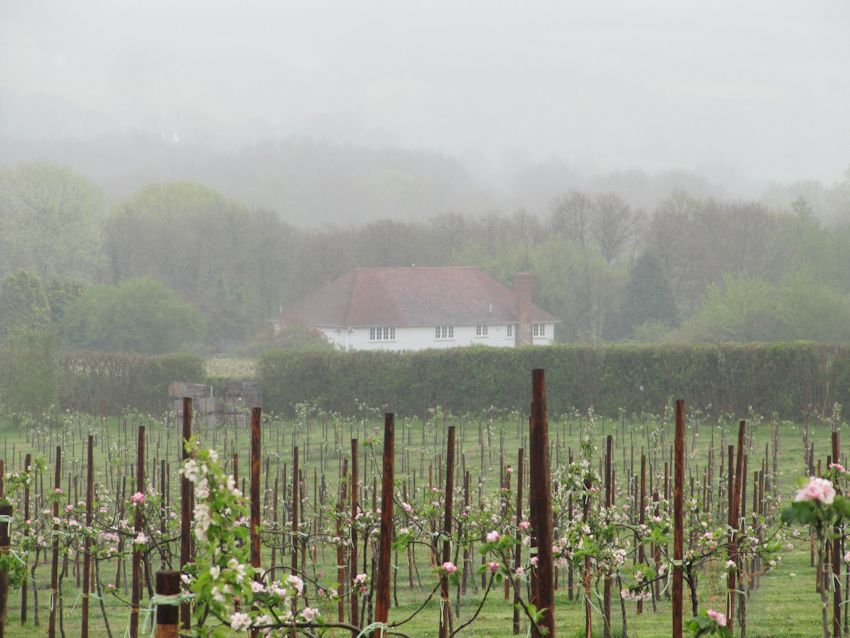 A misty day at Sheet Hill Farm