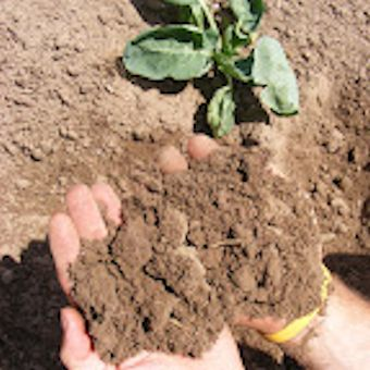 Fusion Farming - its all in the soil