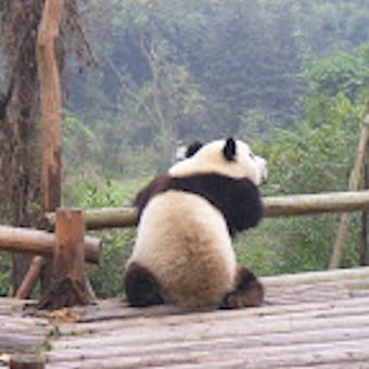 Stephen Ware's Scholarship report is an excellent overview of Global apple production - even this Panda Ponders over the report