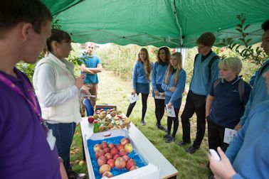 Kirsty Malpass aided by Hadlow students explains the agronomy aspects of apple growing