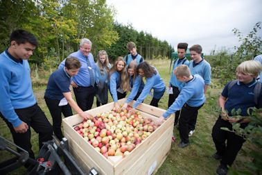 Students picked apples and placed them in this bulk bin