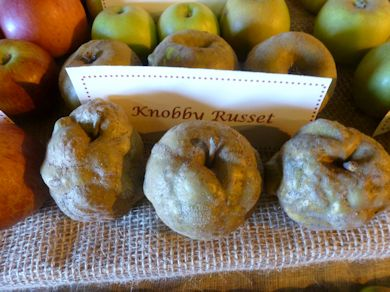 Knobbly Russet
