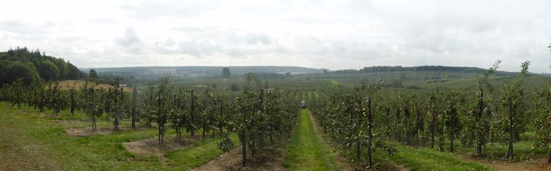 A panoramic view across Nickle Farm