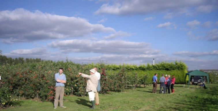 BIFGA members gather at Hadlow College to view the progress of th BIFGA '21' trial orchard