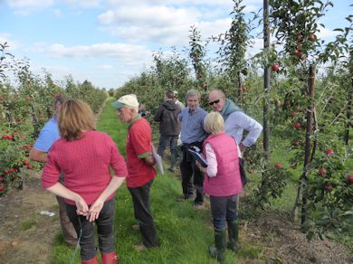 BIFGA members discuss the attributes of new varieties