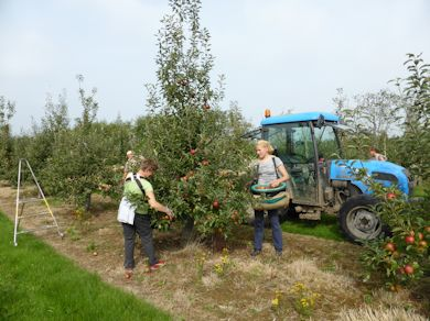 Pickers busy at work in East Kent on Wednesday