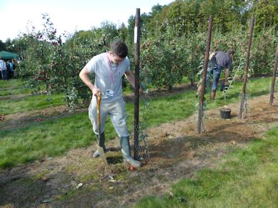 The visiting schools were shown how an apple tree should be planted