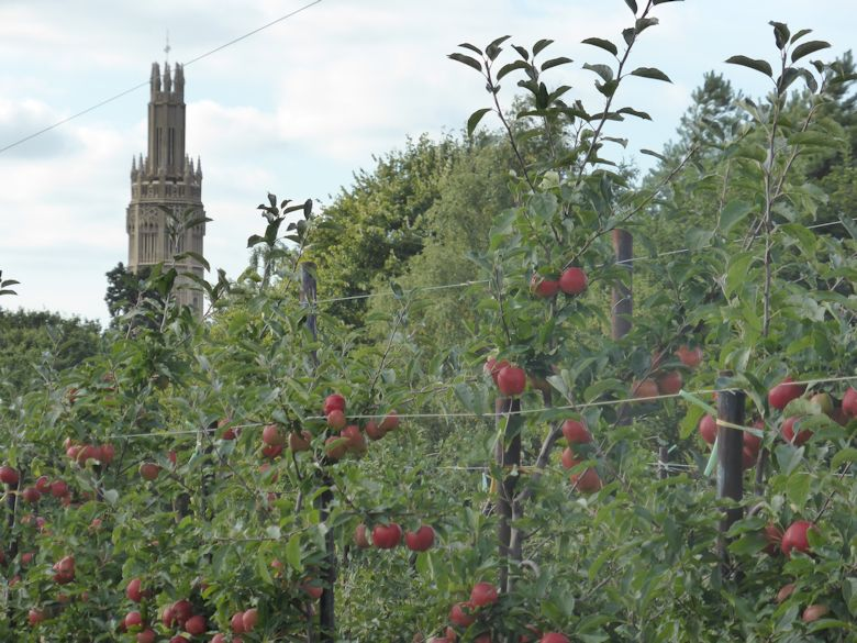 In the view of the Hadlow Castle Tower, the orchards were a perfect setting